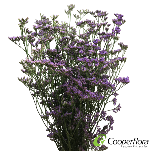 LIMONIUM ARIZONA BLUE